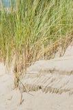 Erba della duna su Sandy Shore Fotografia Stock