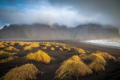 Erba della duna sulla spiaggia nera Fotografia Stock