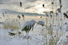 Erba della neve Fotografia Stock