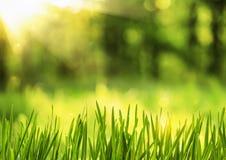 Erba della primavera al sole Fotografia Stock