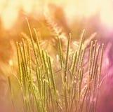 Erba della primavera - alta erba Immagine Stock Libera da Diritti