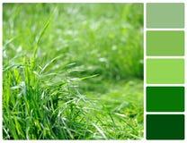 Erba della primavera con i campioni di colore della tavolozza Fotografia Stock