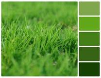 Erba della primavera con i campioni di colore della tavolozza Immagine Stock