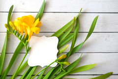 Erba della primavera e fiori gialli con i germogli con la carta su fondo di legno Fotografia Stock Libera da Diritti