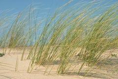 Erba della spiaggia Fotografia Stock Libera da Diritti