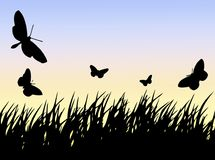 Erba delle farfalle N Fotografia Stock