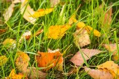Erba di Autumn Colorful Leaves In Green in parco immagine stock libera da diritti