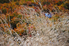 Erba di autunno Fotografia Stock