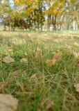 Erba di autunno e foglie cadute Immagine Stock
