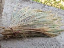 Erba di bambù, erba della tigre, colori differenti dei fiori dell'erba, disposizione sparsa fuori per asciugarsi Immagini Stock Libere da Diritti
