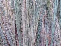 Erba di bambù, erba della tigre, colori differenti dei fiori dell'erba, disposizione sparsa fuori per asciugarsi Immagine Stock