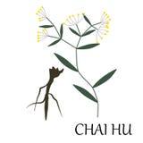 Erba di Chai HU Fotografie Stock Libere da Diritti