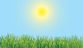 Erba di estate illustrazione vettoriale