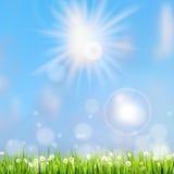 Erba di estate alla luce del sole. ENV 10 Fotografia Stock