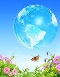 Erba di estate, fiori insetto e terra sul fondo del cielo blu Fotografia Stock