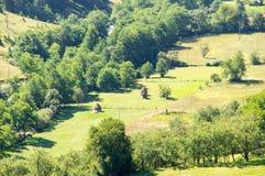 Erba di falciatura sulla montagna bagnata in Serbia Fotografia Stock