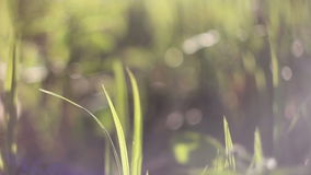 Erba di fioritura che piega nel vento sfuocatura Bokeh video d archivio