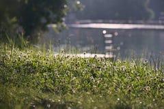 Erba di fioritura vicino al lago dell'allume di jezero di Kamencove in città ceca di Chomutov alla sera dopo la pioggia nel giugn Immagini Stock Libere da Diritti
