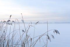Erba di inverno su Misty Snowy Field Fotografia Stock Libera da Diritti