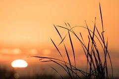 erba di mattina del sole di incandescenza di giallo della foglia di caduta fotografia stock libera da diritti