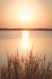 Erba di missione o pennisetum della piuma e tramonto, ambiti di provenienza d'annata Fotografia Stock Libera da Diritti