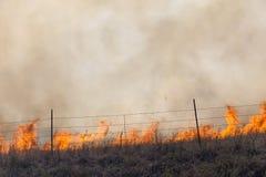 Erba di prateria bruciante Fotografia Stock Libera da Diritti