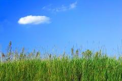 Erba di prato e un cielo blu immagini stock