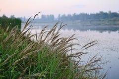 Erba di Reed lungo il lago sul tramonto Immagini Stock Libere da Diritti