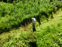 Erba di taglio del giardiniere con il decespugliatore Fotografia Stock Libera da Diritti
