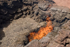 Erba di Timanfaya che si trasforma il fuoco Immagine Stock