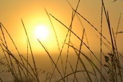 Erba di tramonto Immagini Stock