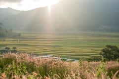 Erba dietro il giacimento del riso Fotografie Stock