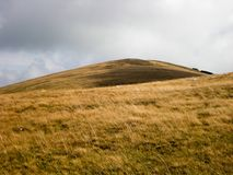 Erba dorata sulla cima della montagna Fotografia Stock Libera da Diritti