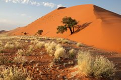 Erba, duna ed albero, Namibia immagini stock libere da diritti