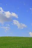 Erba e cielo Fotografia Stock