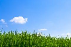 Erba e cielo blu Fotografia Stock