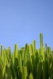 Erba e cielo blu Fotografie Stock Libere da Diritti
