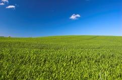 Erba e cielo blu Immagini Stock Libere da Diritti
