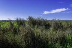 Erba e cielo blu alti Immagini Stock Libere da Diritti