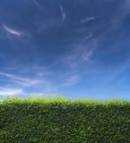 Erba e cielo blu nella parte posteriore Fotografia Stock