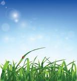 Erba e coccinella su fondo blu Fotografia Stock