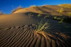 Erba e duna Fotografia Stock Libera da Diritti