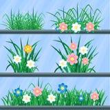 Erba e fiori Immagine Stock Libera da Diritti
