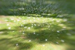 Erba e fiori astratti in parco Immagini Stock Libere da Diritti