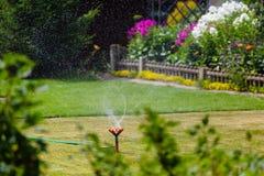 Erba e fiori d'innaffiatura dello spruzzatore del giardino Fotografie Stock Libere da Diritti