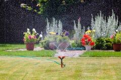 Erba e fiori d'innaffiatura dello spruzzatore del giardino Immagini Stock