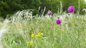 Erba e fiori della steppa della primavera archivi video
