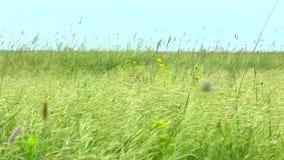 Erba e fiori della steppa della primavera stock footage