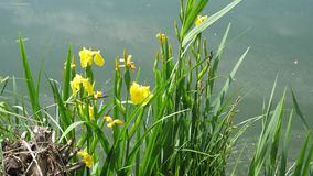 Erba e fiori di purezza della natura stock footage