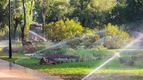 Erba e fiori di versamento dal sistema a acqua di irrigazione video d archivio